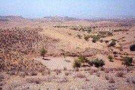 Terreno Rambo: Land for sale in Albox, Almeria