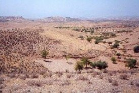 Terreno Rambo: Land for sale in Albox, Almeria